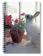 Bunny In Window Spiral Notebook
