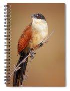 Burchell's Coucal - Rainbird Spiral Notebook