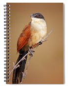 Burchell's Coucal - Rainbird Spiral Notebook