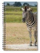 Burchell's Zebra On Grassy Plain Facing Camera Spiral Notebook