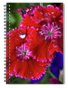 Burgandy Red Dianthus Spiral Notebook