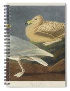 Burgomaster Gull Spiral Notebook