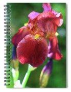 Burgundy Iris Spiral Notebook