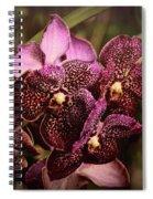 Burgundy Treasures Spiral Notebook