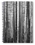 Burnt Forest Spiral Notebook