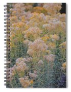 Burro Bush Spiral Notebook