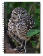 Burrowing Owl Color Version Spiral Notebook