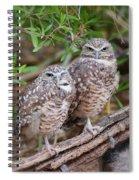 Burrowing Owl Pair  Spiral Notebook