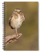 Burrowing Owl Taking A Break Spiral Notebook