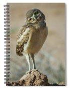 Burrowing Owlet-img_1414-2017 Spiral Notebook