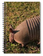 Busy Armadillo Spiral Notebook