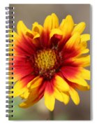 Butter Yellow And Crimson Red Coneflower Spiral Notebook