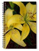 Buttercream Lilies Spiral Notebook