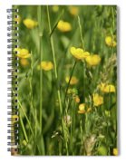 Buttercups And Green Grass At Moore State Park Spiral Notebook