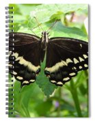 Butterflies Live - 8 Spiral Notebook