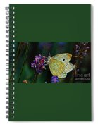 Butterfly 18718 Spiral Notebook