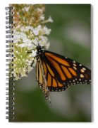 Butterfly #6 Spiral Notebook