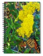 Butterfly At Cape May Nj Spiral Notebook