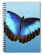 Blue Morpho Beauty Spiral Notebook