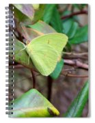 Butterfly Camouflage Spiral Notebook