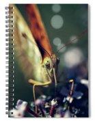 Butterfly Close Up Spiral Notebook
