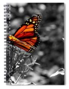 Butterfly Color On Black And White Spiral Notebook