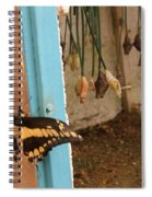 Butterfly Drying His New Wings Spiral Notebook