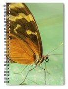 Butterfly Eueides Isabella Spiral Notebook