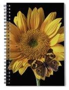 Butterfly Eyes Spiral Notebook