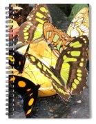 Butterfly Feast  Spiral Notebook