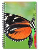 Butterfly  Golden Helicon Spiral Notebook