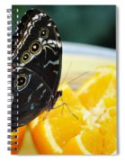 Butterfly Haven Citrus Spiral Notebook