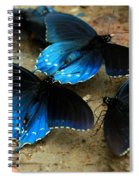 Butterfly Huddle At The Puddle Spiral Notebook