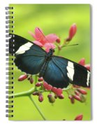 butterfly in Square Spiral Notebook