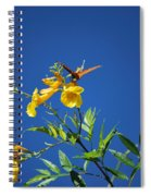 Butterfly In The Sonoran Desert Musuem Spiral Notebook