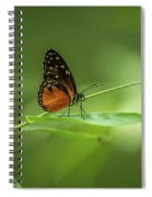 Golden Helicon Butterfly Spiral Notebook