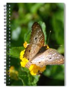 Butterfly Land Spiral Notebook