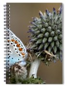 butterfly on a Echinops adenocaulon Spiral Notebook