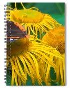 Butterfly On Chrysanthemum Flowers Spiral Notebook