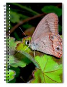 Butterfly On Geranium Leaf Spiral Notebook