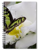 Butterfly On Orchid Spiral Notebook