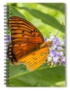 Butterfly On Purple Spiral Notebook