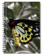 Butterfly One Spiral Notebook