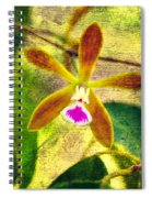 Butterfly Orchid - Encyclia Tampensis Spiral Notebook