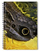 Butterfly Reflections Spiral Notebook