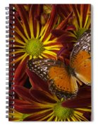 Butterfly Resting On Chrysanthemums Spiral Notebook