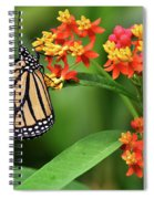 Butterfly Resting On Flower Spiral Notebook