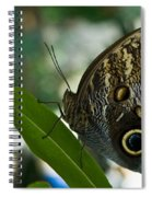 Butterfly Sitting Spiral Notebook