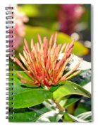 Butterfly Snack Spiral Notebook