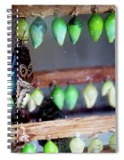 Butterfly With Butterfly Chrysalis 1 Spiral Notebook